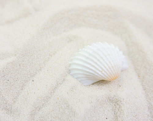 Natural Whites Beach and Seashell
